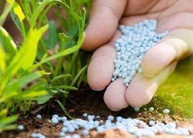 ایده های مبتنی بر فناوری در بخش کشاورزی حمایت می شوند