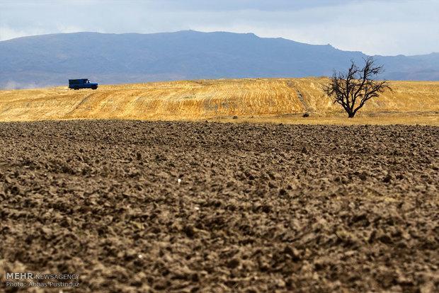 تنها 10 درصد اراضی استان زنجان دارای خاک درجه یک هستند