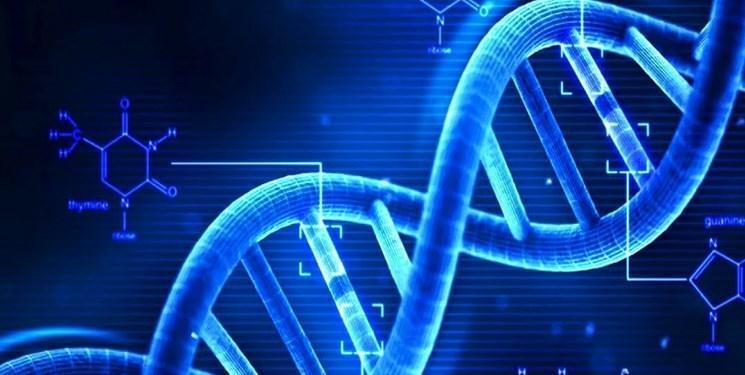 دستکاری ژنتیک سلول های بنیادی در بدن برای نخستین بار
