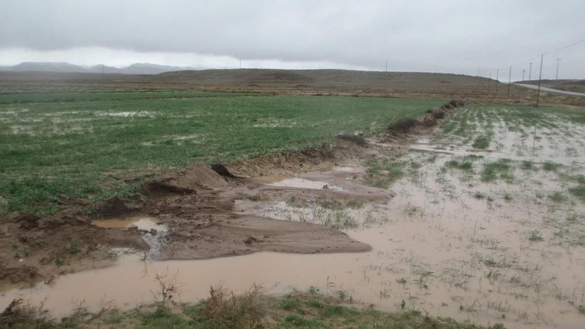 خبرنگاران بارندگی هفت میلیارد ریال به کشاورزی تربت حیدریه خسارت زد